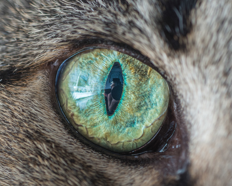 Photo : Andrew Marttila aka The Great Went Pet Photography / Cat Eyes Macro Photography