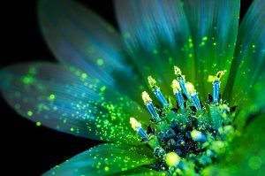 Photo : Craig P. Burrows / Glowing Flowers