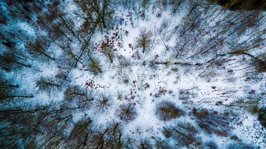 Photo : Michael B. Rasmussen / Flying high over the woods.