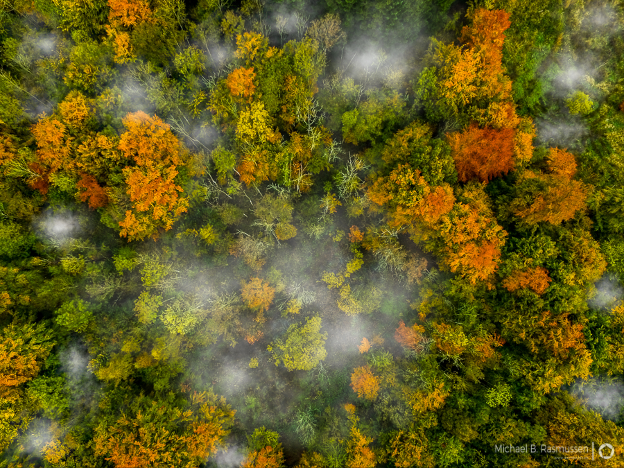 Photo : Michael B. Rasmussen / Misty autumn forest