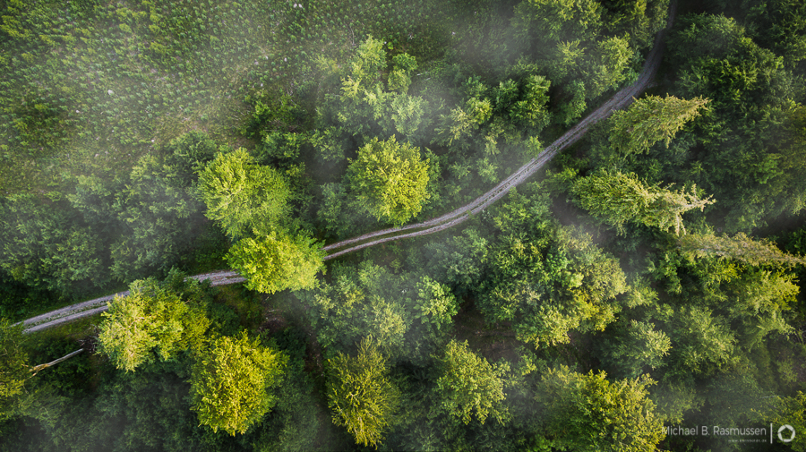 Photo : Michael B. Rasmussen / A curved forest road under clouds in Denmark