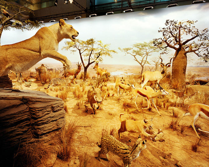 China, Shanghai; Science and Technology Museum; Animals World © Reiner Riedler