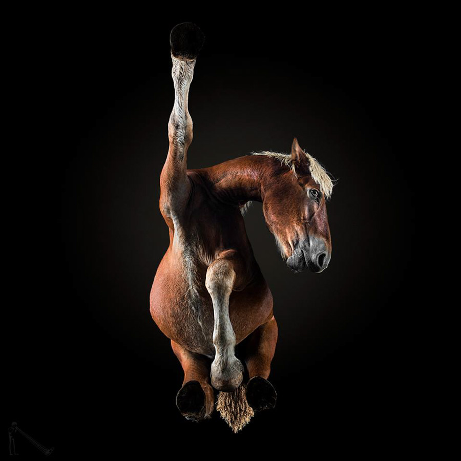 Photo : Andrius Burba / Under-Horse