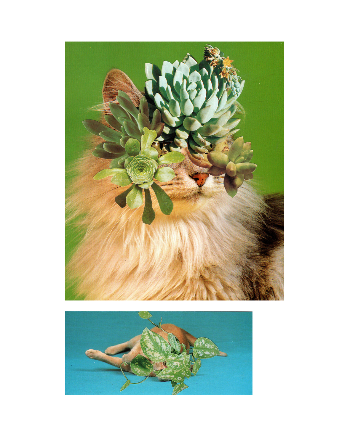 Photomontage - Stephen Eichhorn - Cats & Plants - Cat Sampler 2011