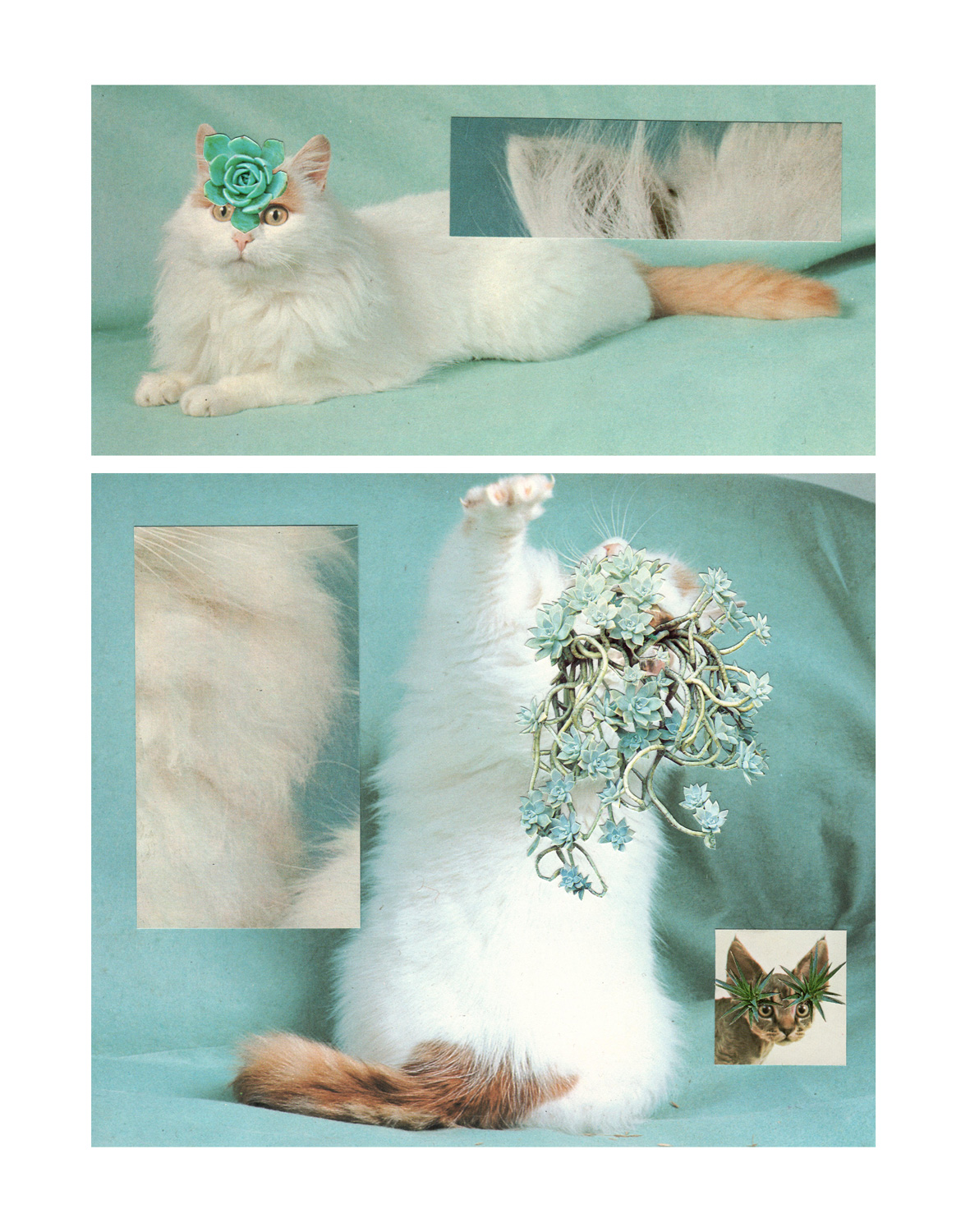 Photomontage - Stephen Eichhorn - Cats & Plants - Fur Party 2014