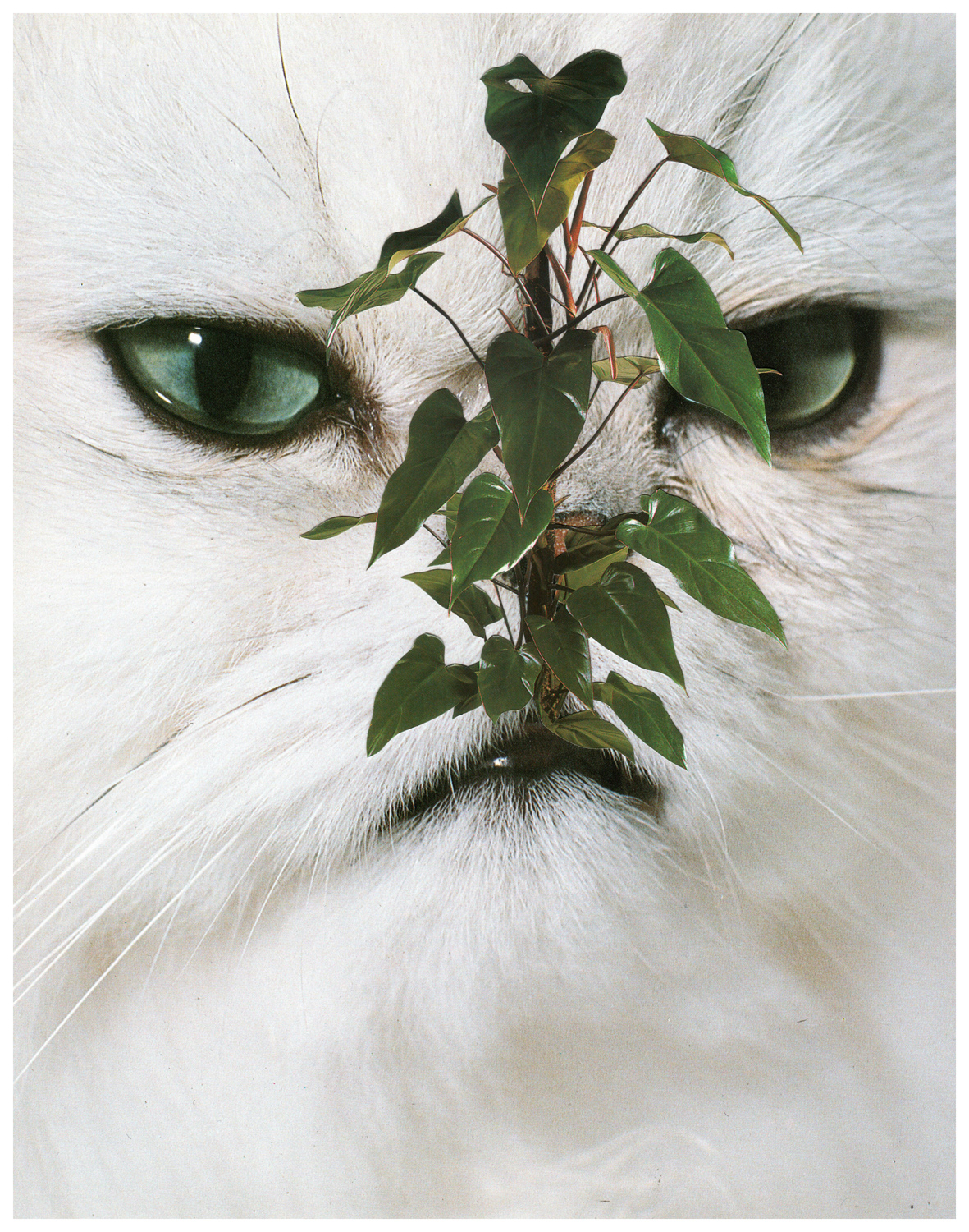 Photomontage - Stephen Eichhorn - Cats & Plants - House Plant, 2014, collage on archival paper