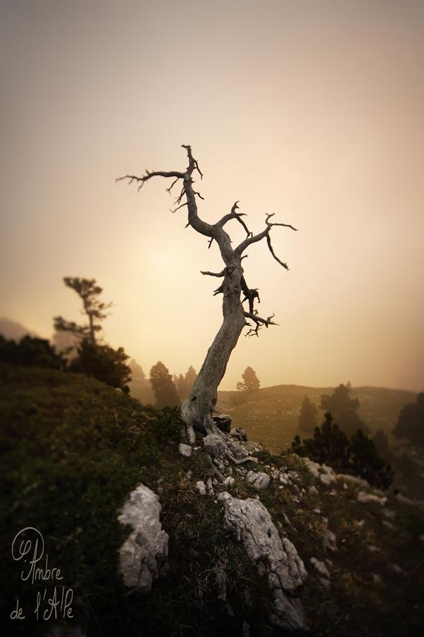 Photo - Ambre de l'AlPe, La Main de la Terre