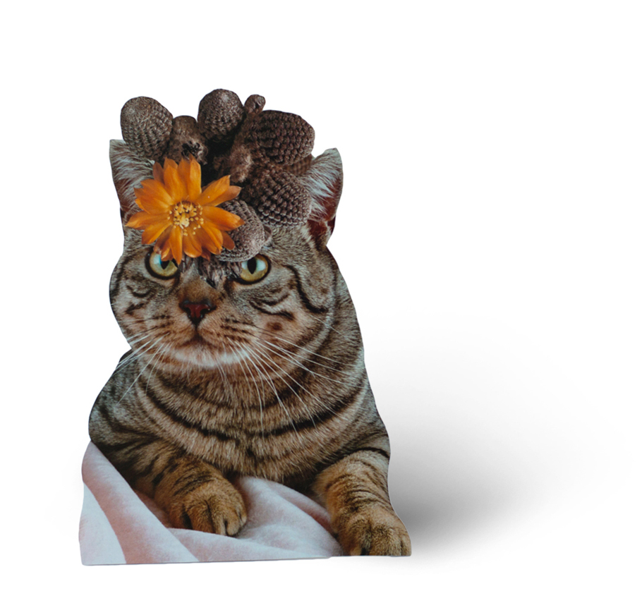 Photomontage - Stephen Eichhorn - Cats & Plants - Lounging Flower 2015
