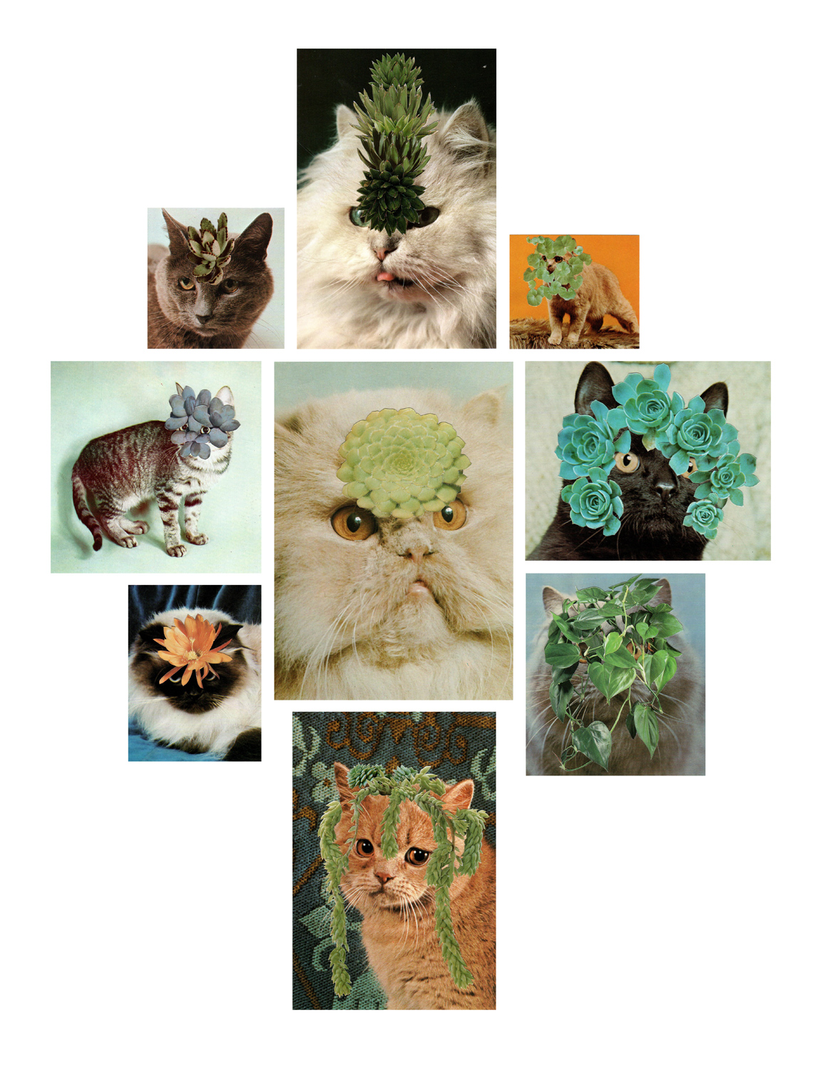 Photomontage - Stephen Eichhorn - Cats & Plants - Pink Nine (II) 2009