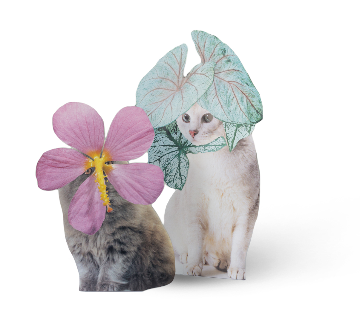 Photomontage - Stephen Eichhorn - Cats & Plants - Pink Flower (left), Houseplant (right) 2016