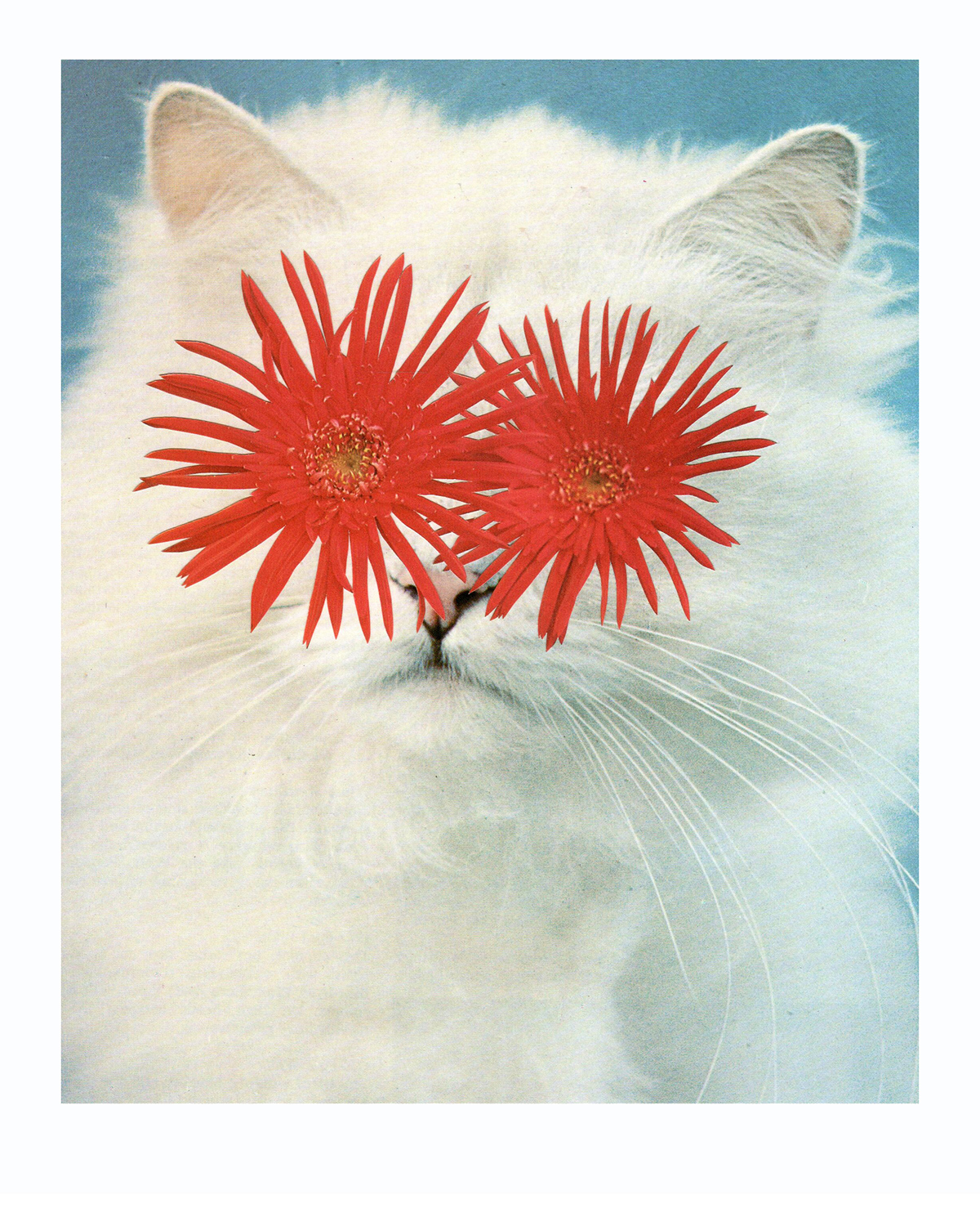 Photomontage - Stephen Eichhorn - Cats & Plants - Red Eyes 2010