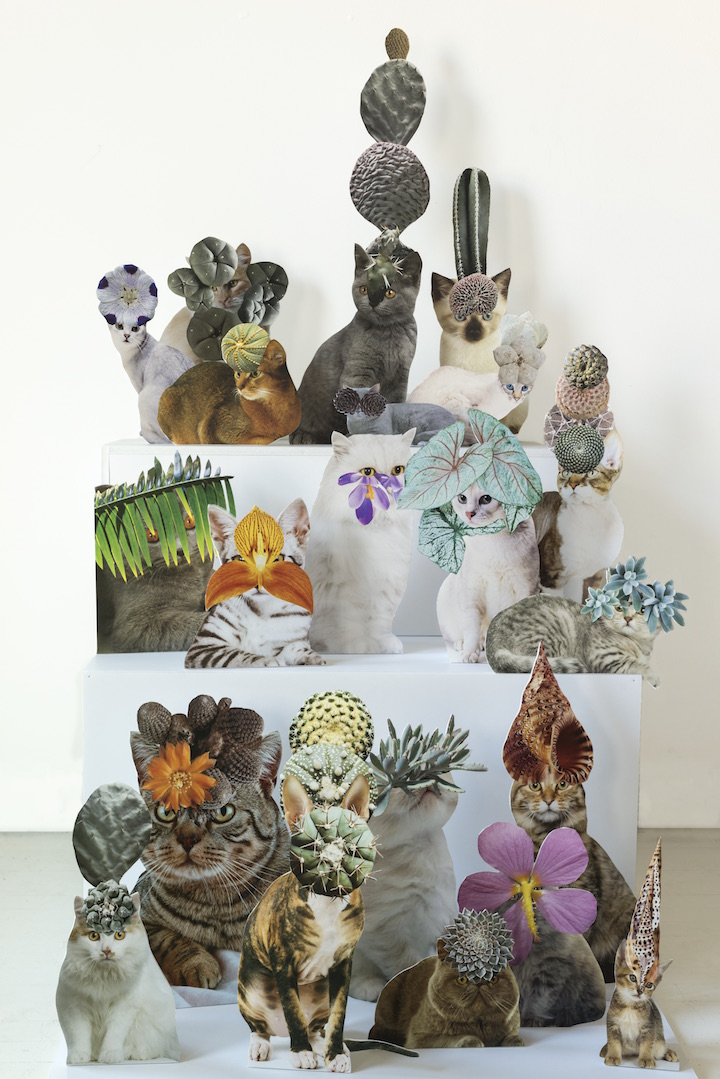 Photomontage - Stephen Eichhorn - Cats & Plants - Composite