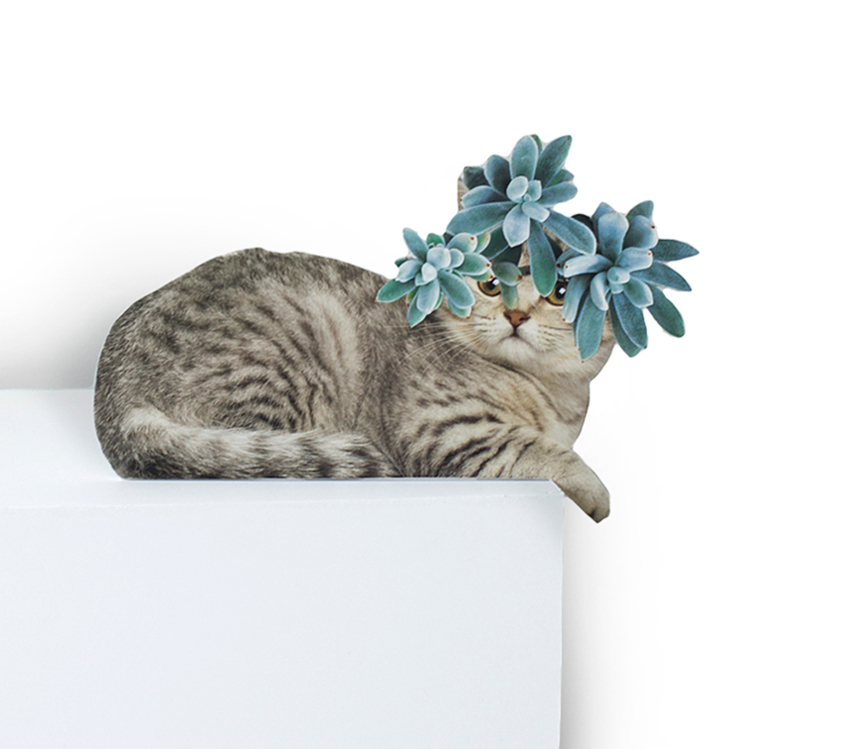 Photomontage - Stephen Eichhorn - Cats & Plants - Succulent Shorty 2015