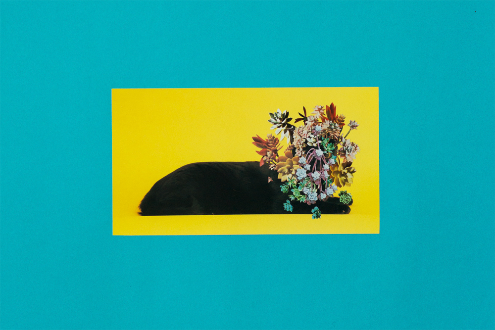 Photomontage - Stephen Eichhorn - Cats & Plants - Teal (Succulents) 2015