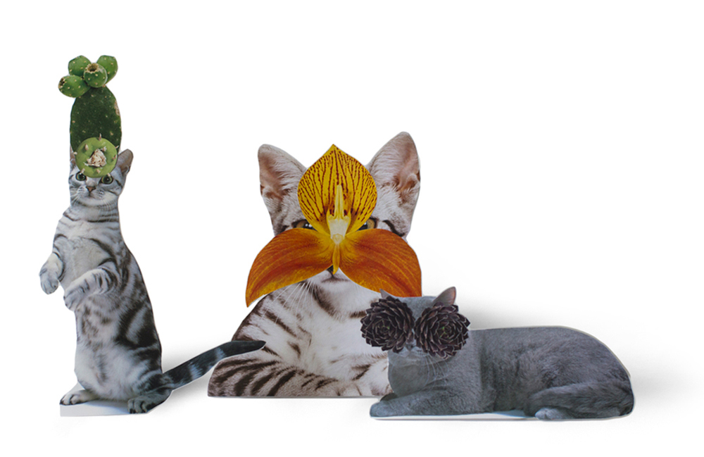 Photomontage - Stephen Eichhorn - Cats & Plants - Treats (left), Orchid (middle), Black Eyes (right) 2015