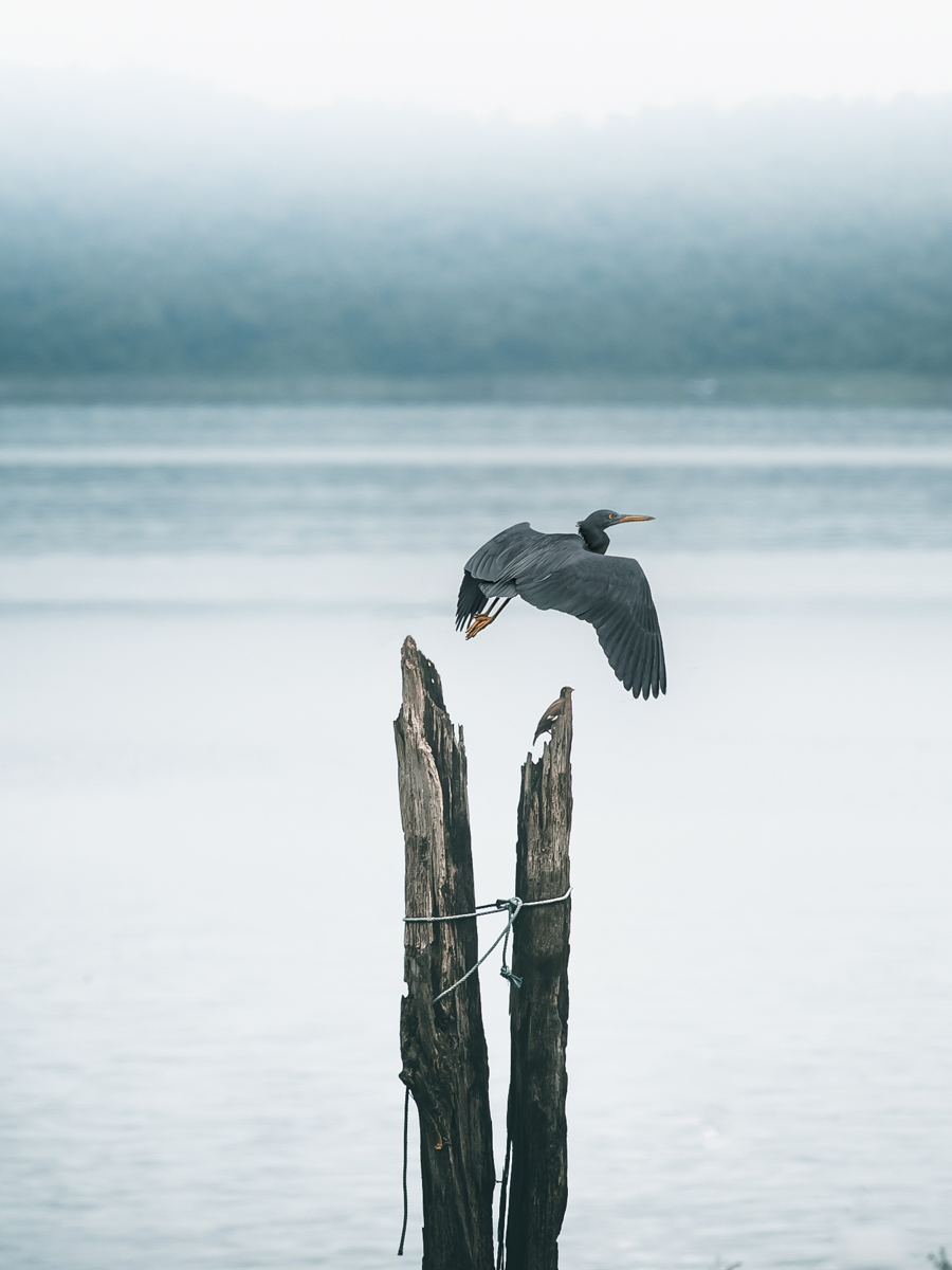 Photo d'un oiseau en mer, Alexis Rateau