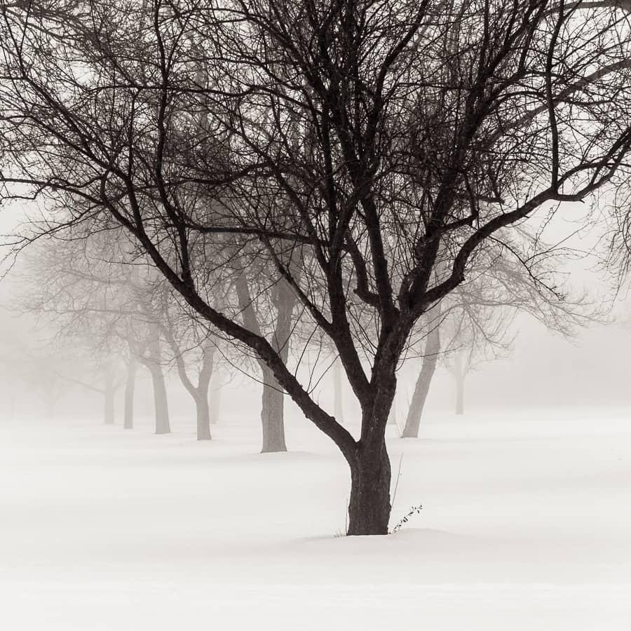 Arbres du Midwest américain sous la neige, paysage monochrome