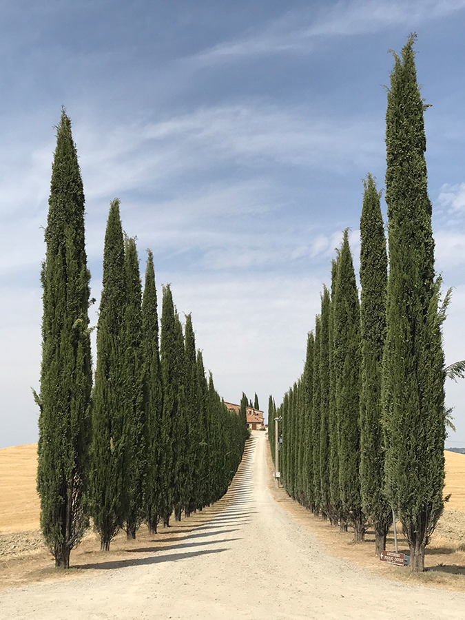 "Lidia Muntean Romania 1st Place – Trees Road of Tuscany ""This photo was taken near Pienza and Montalcino."" Location: Val D'Orcia Shot on iPhone 7 Plus"