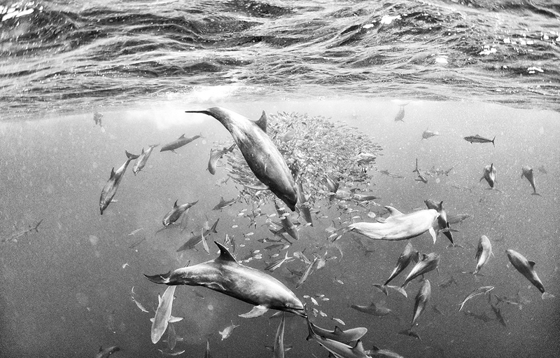 Anuar Patjane - Underwater Realm - Images from Isla del Coco, Costa Rica. Created during an expedition in 2016 aboard the Argo.