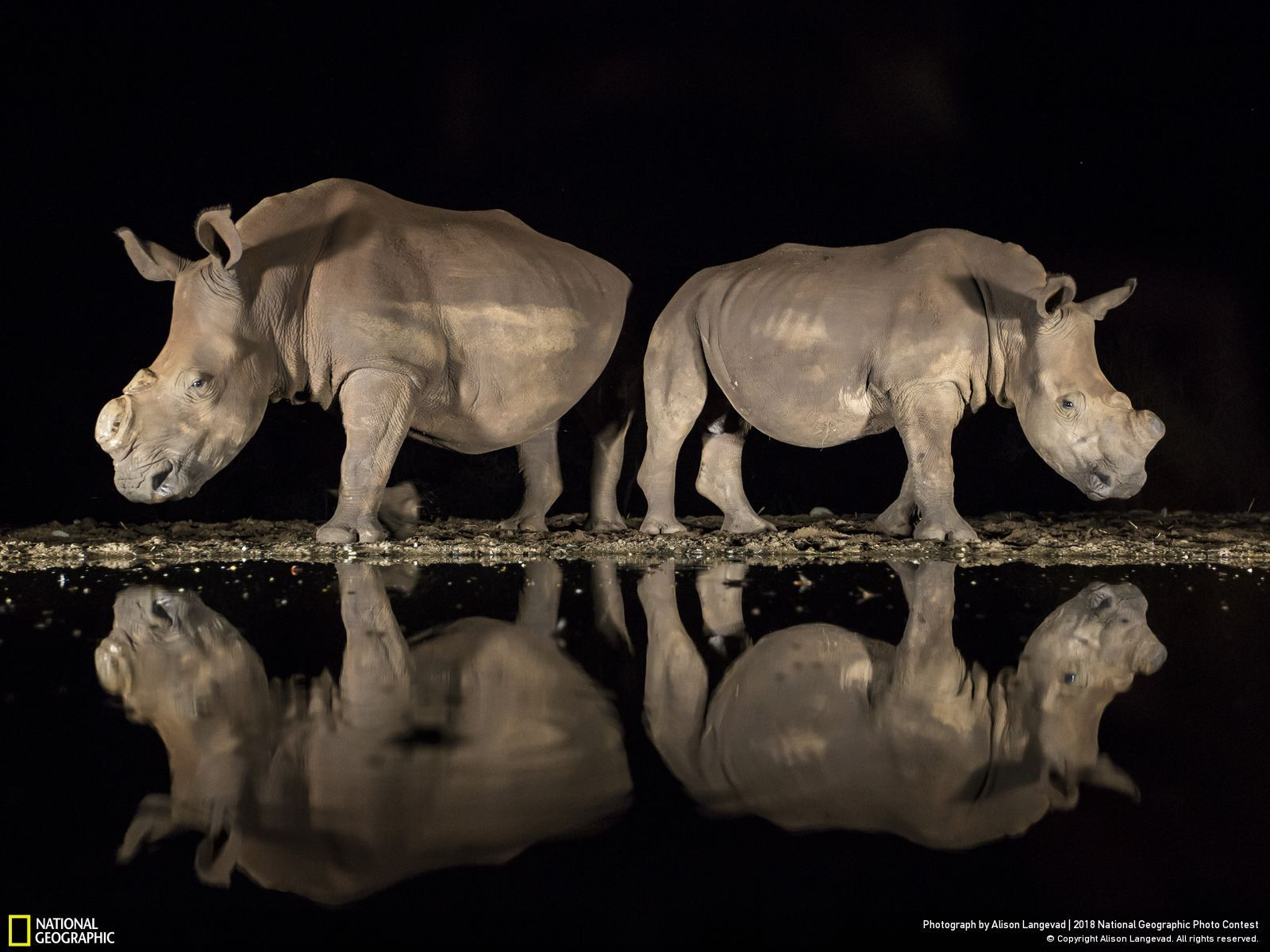 Troisième Prix Wildlife National Geographic Photo Contest, A New Look par Alison Langevad